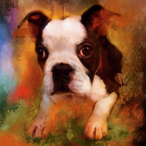 Terrier Digital Art - Boston Puppy by Jeff Burgess