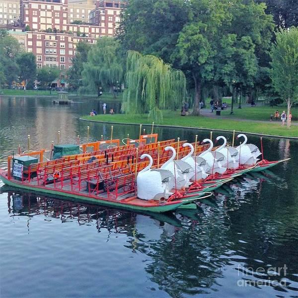Swan Boats Photograph - Boston Swan Boats by Gina Sullivan