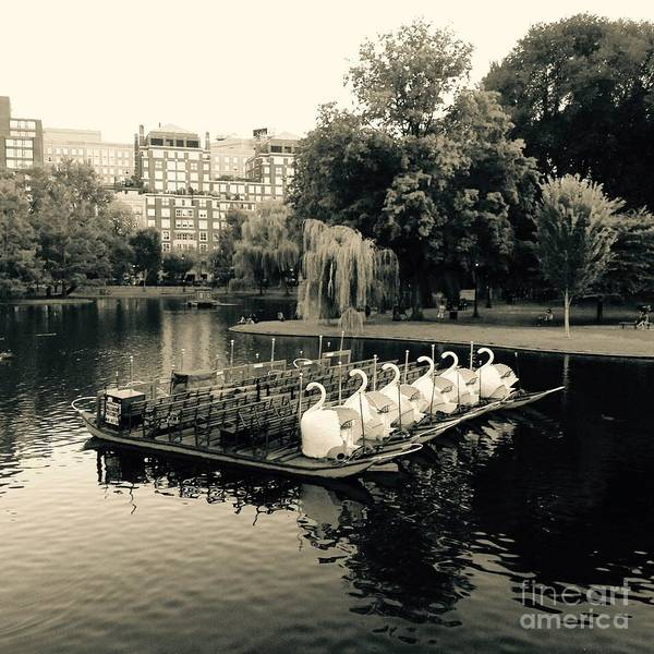 Swan Boats Photograph - Boston Swan Boats In Black And White by Gina Sullivan