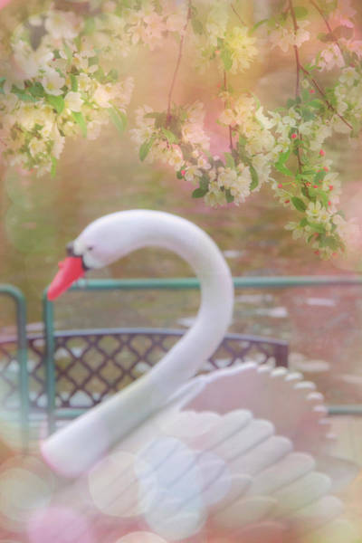 Photograph - Boston Swan Boats In The Public Garden by Joann Vitali