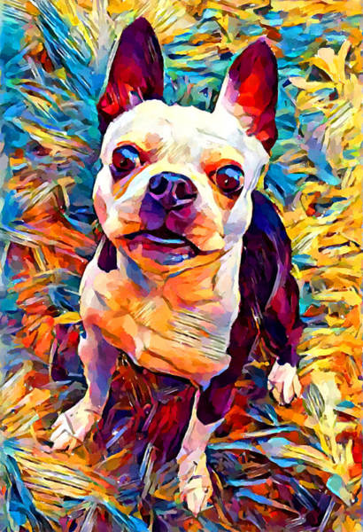 Wall Art - Painting - Boston Terrier by Chris Butler