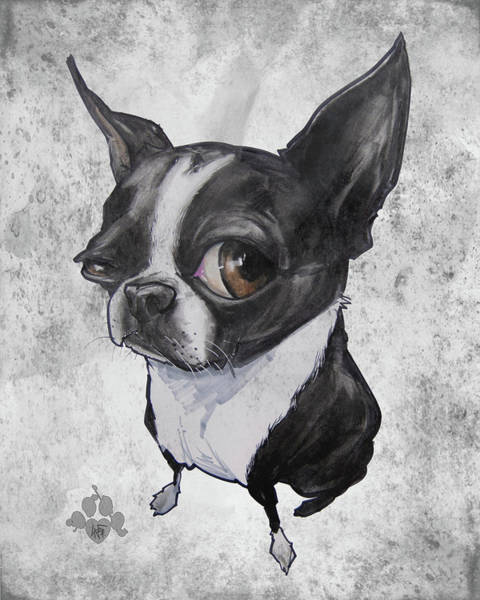Pet Portrait Drawing - Boston Terrier - Grey Antique by John LaFree