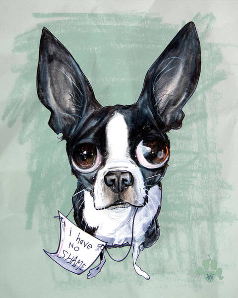 Pet Portrait Drawing - Boston Terrier - I Have No Shame by John LaFree