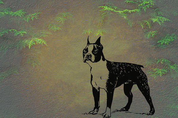 Mixed Media - Boston Terrier  by Movie Poster Prints