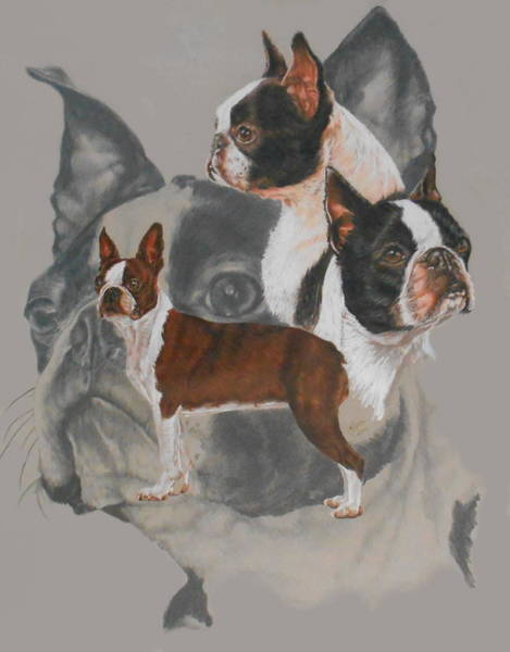 Mixed Media - Boston Terrier Revamp by Barbara Keith