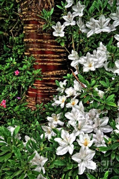 Photograph - Botanic Garden Flowers by Martyn Arnold