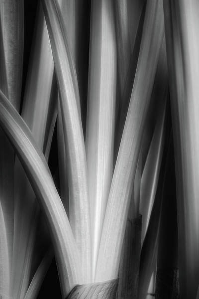 Wall Art - Photograph - Botanical Abstract II by Tom Mc Nemar