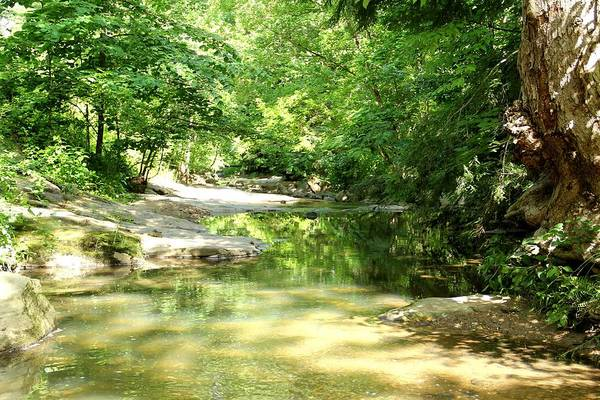 Photograph - Botanical Gardens Stream by Allen Nice-Webb