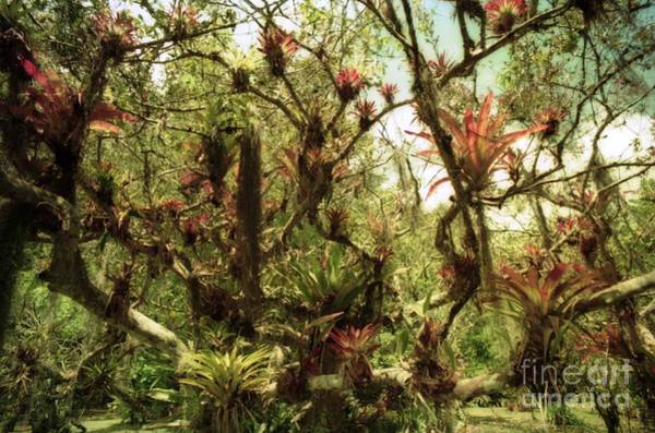 Photograph - Botanical Park Tree Plants by Ted Pollard