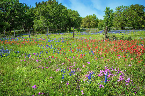 Photograph - Botanical Variety Show In The Texas Hill Country by Lynn Bauer
