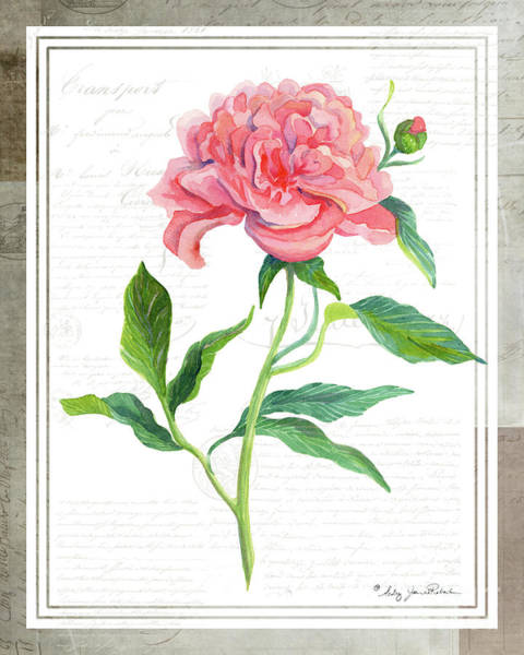 Wall Art - Painting - Botanical Vintage Style Watercolor Floral 1 - Peony by Audrey Jeanne Roberts