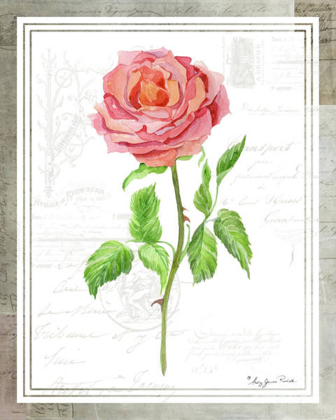 Wall Art - Painting - Botanical Vintage Style Watercolor Floral 2 - Pink English Rose by Audrey Jeanne Roberts