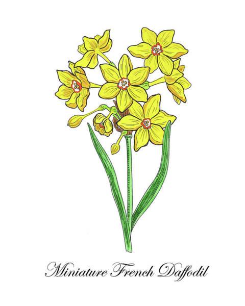 Painting - Botanical Watercolor Of Miniature Daffodil  by Irina Sztukowski