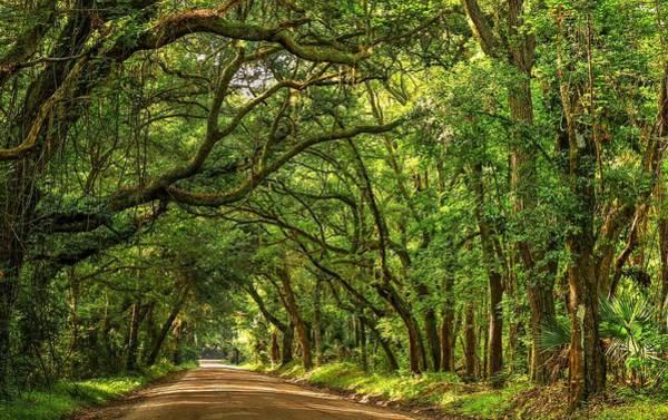 Photograph - Botany Bay Edisto Island South Carolina Road Light And Shadow by Carol Montoya