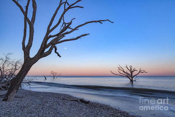 Photograph - Botany Bay Moonrise by Richard Sandford