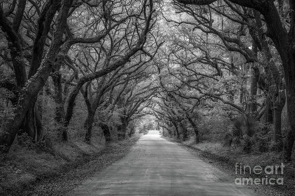 Mv Photograph - Botany Bay Road Black And White by Michael Ver Sprill