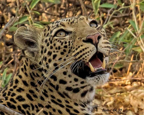 Digital Art - Botswana Leopard by Larry Linton