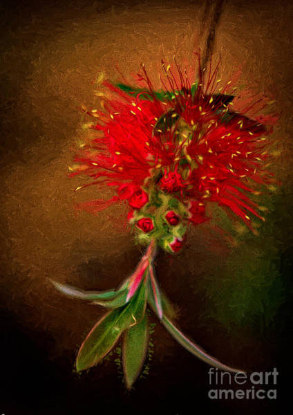 Photograph - Bottle Brush Flower by Patti Schulze