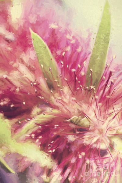 Pastel Drawing Photograph - Bottle Brush Flower Species Digital Painting by Jorgo Photography - Wall Art Gallery