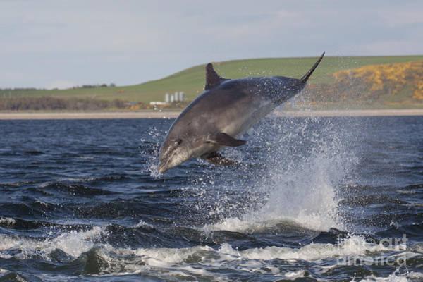 Photograph - Bottlenose Dolphin - Scotland #19 by Karen Van Der Zijden