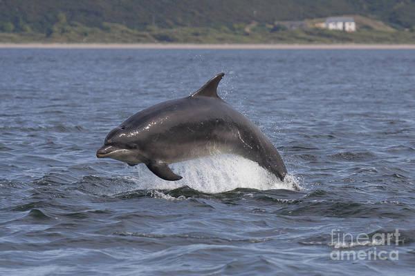 Photograph - Bottlenose Dolphin  - Scotland #22 by Karen Van Der Zijden