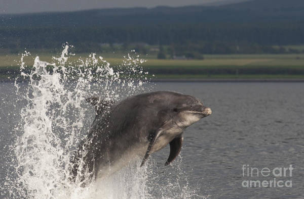 Photograph - Bottlenose Dolphin - Scotland  #24 by Karen Van Der Zijden