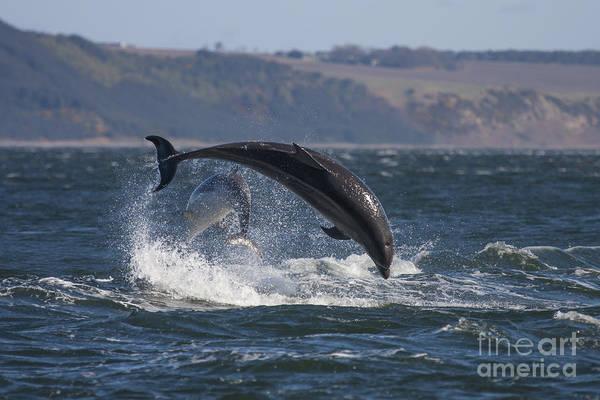 Bottlenose Dolphins - Scotland  #25 Art Print
