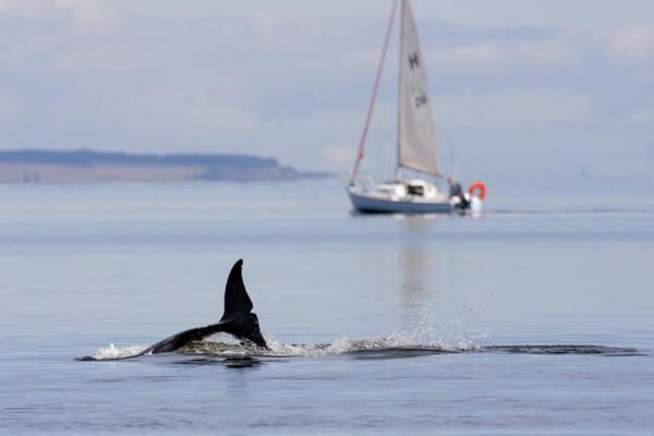 Photograph - Bottlenose Dolphin - Scotland  #34 by Karen Van Der Zijden