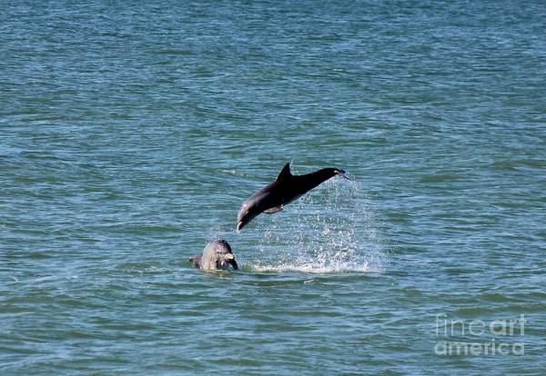Wall Art - Photograph - Bottlenose Dolphins In The Ocean by Mesa Teresita