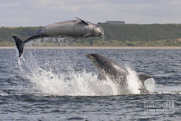 Photograph - Bottlenose Dolphins - Scotland #12 by Karen Van Der Zijden