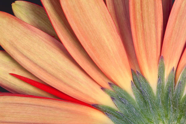 Photograph - Flower Bottom View by Ken Barrett