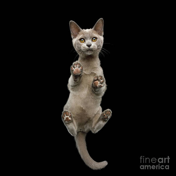 Photograph - Bottom View Of Kitten by Sergey Taran