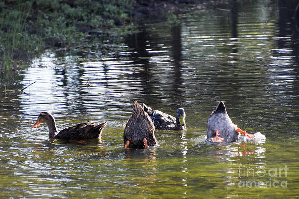 Photograph - Bottoms Up by Cheryl McClure