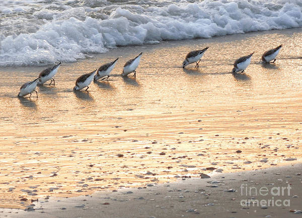 Wall Art - Photograph - Bottoms Up by Lucyna A M Green