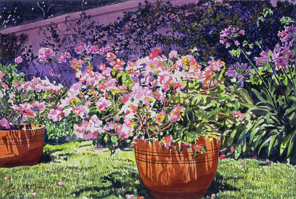 Painting -  Bougainvillea Flower Pots Beverly Hills by David Lloyd Glover