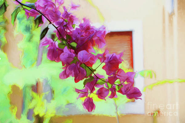 Wall Art - Photograph - Bougainvillea In Courtyard by Sheila Smart Fine Art Photography