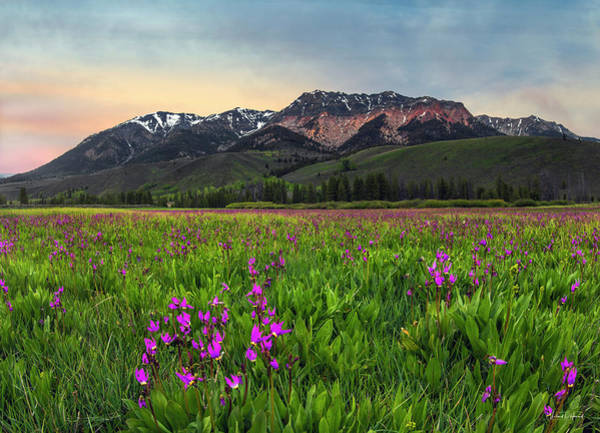 Photograph - Boulder Mountain Spring by Leland D Howard