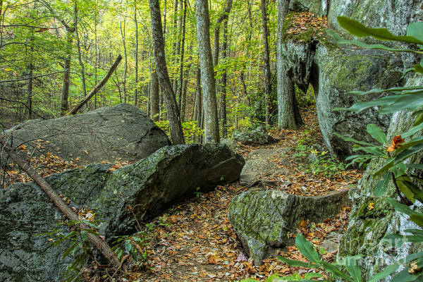 Photograph - Boulders On The Bear Hair Gap Trail by Barbara Bowen