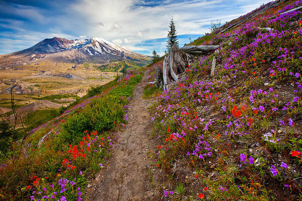 Photograph - Boundary Trail by Darren  White