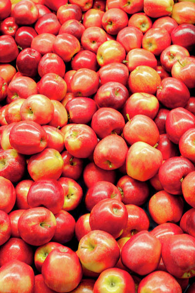 Red Delicious Apple Photograph - Bountiful Apples by Todd Klassy