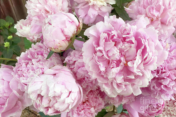 Wall Art - Photograph - Bouquet Of Pink Peonies - Garden Peonies - Pink Shabby Chic Peony Prints Home Decor by Kathy Fornal