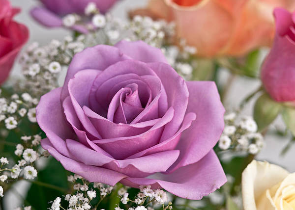 Wall Art - Photograph - Bouquet Of Roses by Jeff Abrahamson