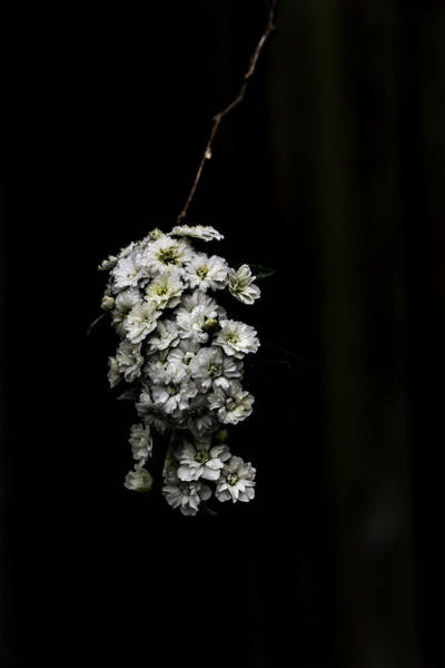 Photograph - Bouquet Of White by Chris Coffee