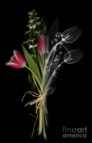 Photograph - Bouquet X-ray by Ted Kinsman