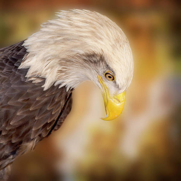 Wall Art - Photograph - Bow Your Head And Prey by Bill Tiepelman