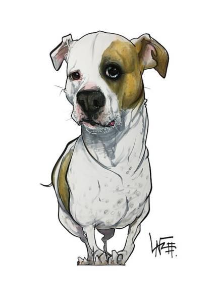 Pet Portrait Drawing - Bowie 3374 1 by John LaFree