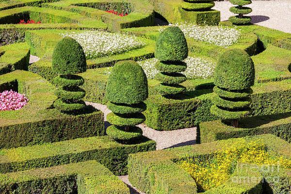 Photograph - Box Hedges Garden by Heiko Koehrer-Wagner