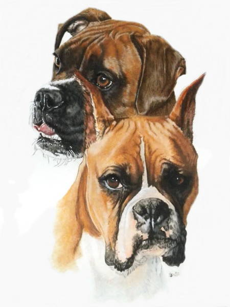 Painting - Boxers In Watercolor by Barbara Keith