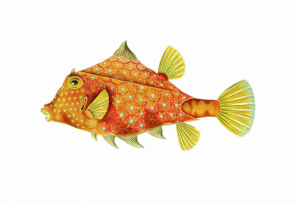 Wall Art - Painting - Boxfish by David Wagner