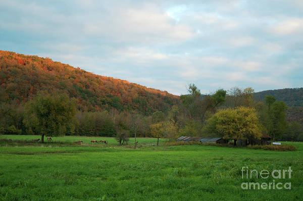 Photograph - Boxley Valley Arkansas by David Waldrop